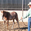 Train your foal, weanling or yearling