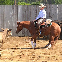 Cow work, cutting horse training and ranch sorting