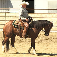 How to start and train horses for reining, cutting and much more.
