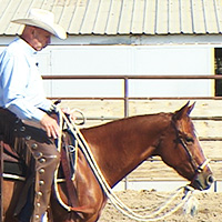 How to train a performance horse with the bosal