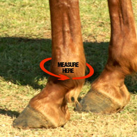 Iconoclast equine support boots for horses