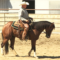 reining-training200